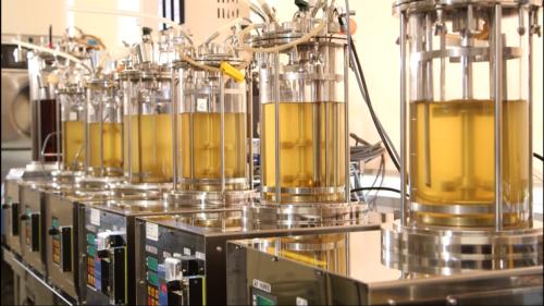 10ℓ単位での培養受託が可能/サンエイ糖化